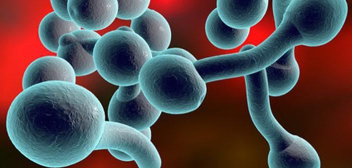 Je ketóza a nízkosacharidová dieta vhodná pro léčbu Candida albicans?