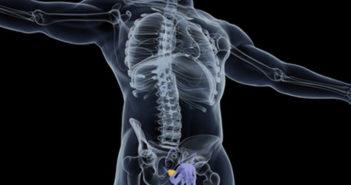 Dávkování a použití zinku v prevenci i při rakovině prostaty