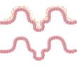 Kvalita střevní mikroflóry a obezita