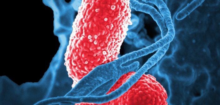 Střevní mikrobiom a jeho vliv na náladu