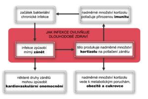 Jak infekce ovlivňuje dlouhodobé zdraví