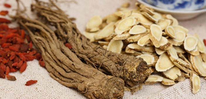 Codonopsis pilosula - ženšen chudých
