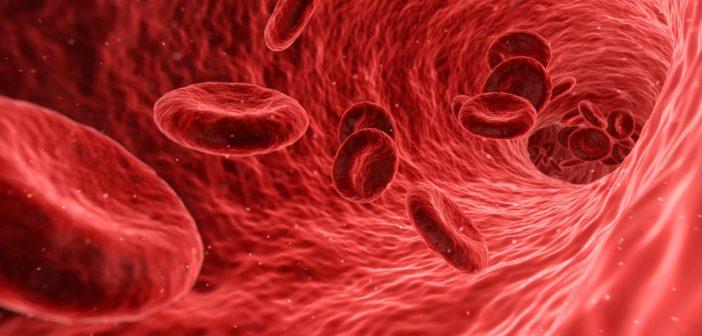 Co se děje v těle po darování krve