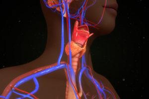 L-tyrosin pro funkci štítné žlázy a zvýšení hormonů štítné žlázy