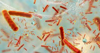 Bakteriální biofilmy
