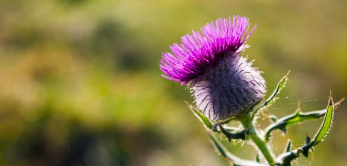 Silybin a zdraví jater: Od výzkumu po klinickou praxi
