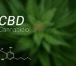CBD pro sportovce: Co potřebujete vědět o kanabidiolu