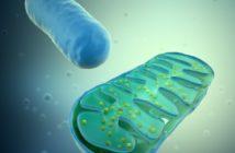 Mitochondrie a únava: skutečná příčina únavy s Dr. Sarah Myhill
