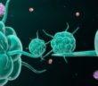 Věci, které běžně děláme, mohou negativně ovlivnit imunitní systém